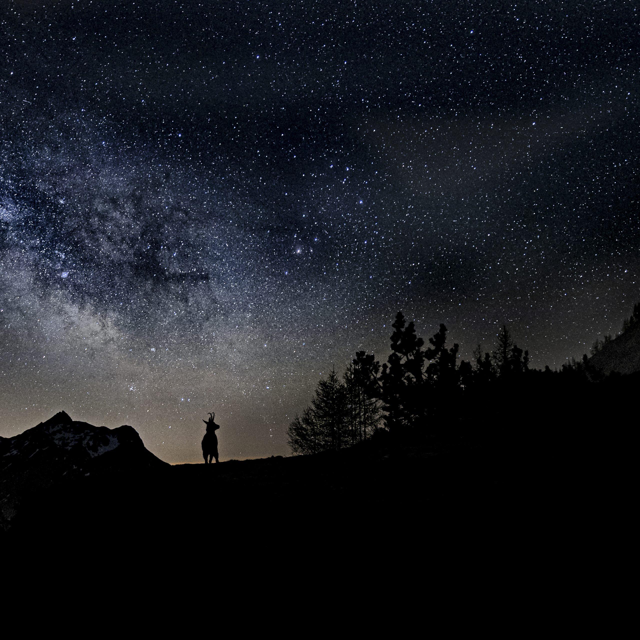 Chamois voir lactée
